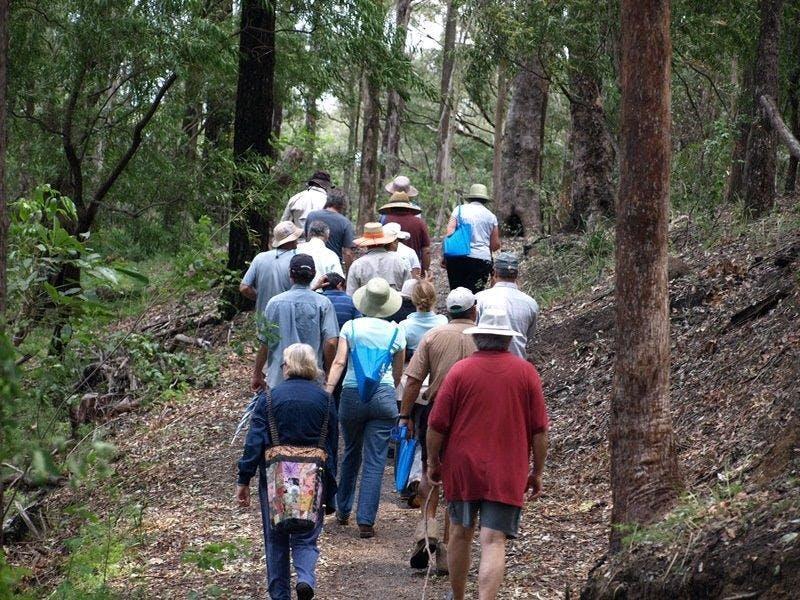 18  Guided Bushwalk  Tugun Hill  More Gold Coast