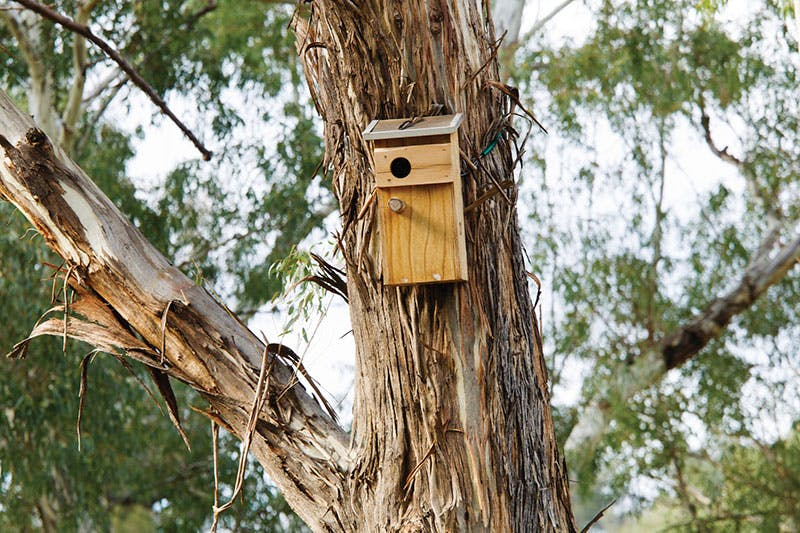 Volunteers and rangers erected nesting boxes for birds in the Warrumbungle National Park. Photo credit: S Cottrell, OEH.