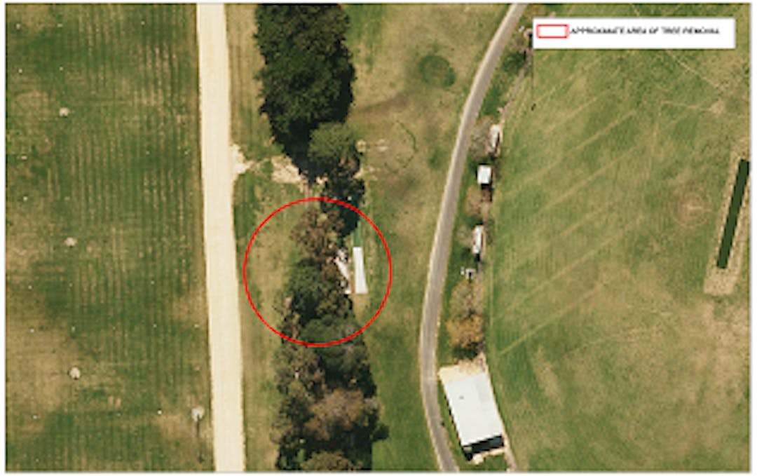 Aerial view of pine trees project image