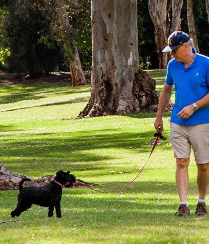 Have Your Say About Dog Management