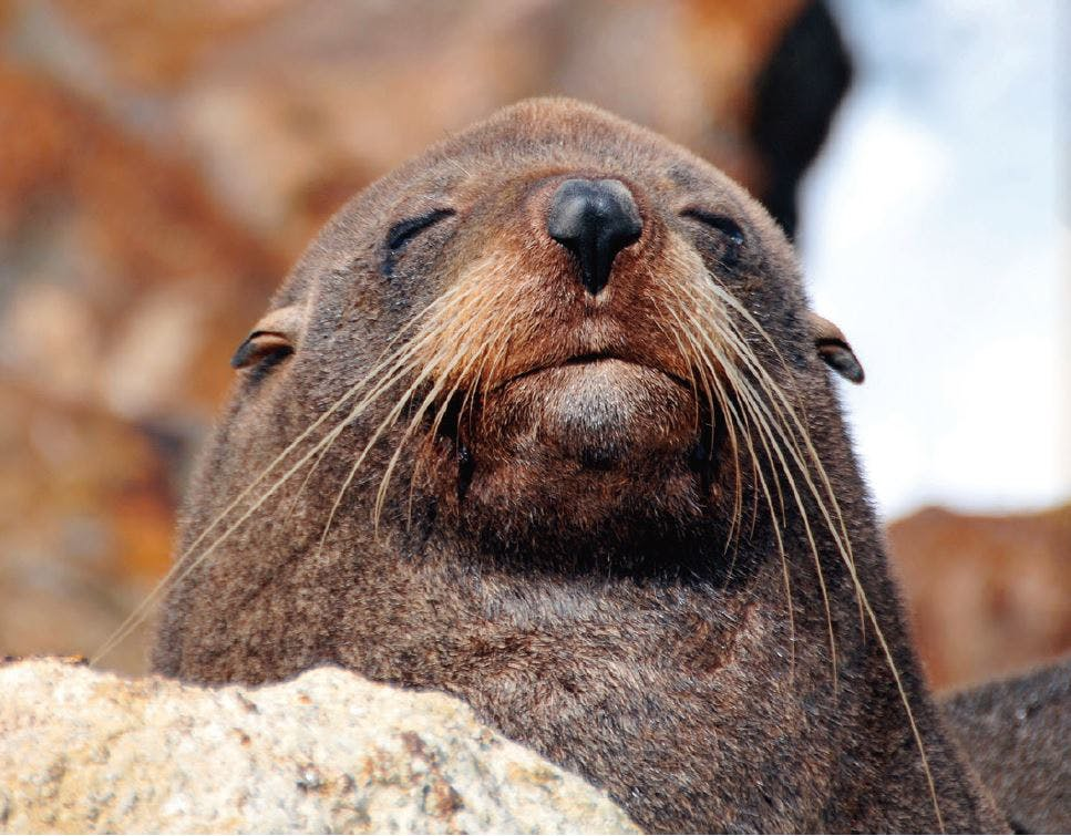 Seal   biodiversity strategy