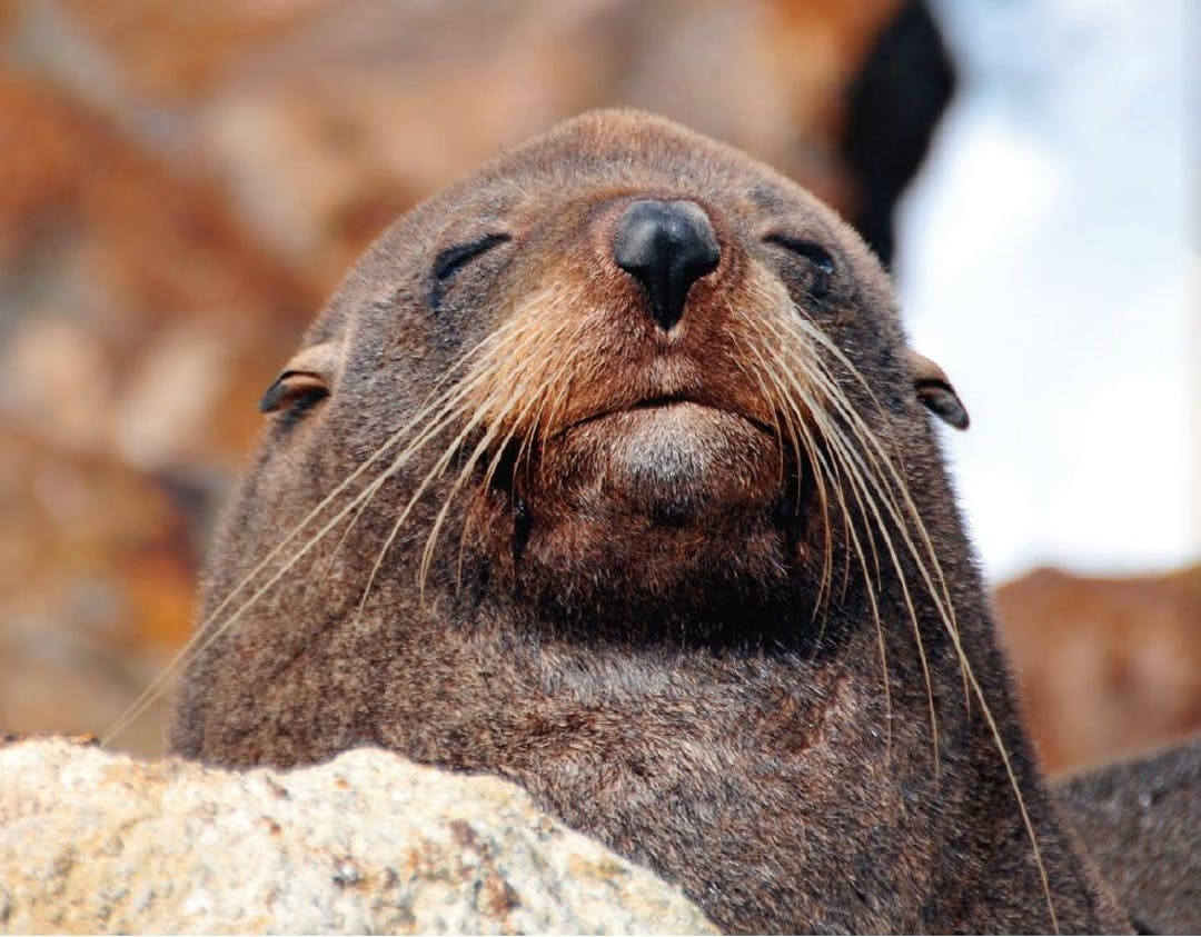 Seal   biodiversity strategy