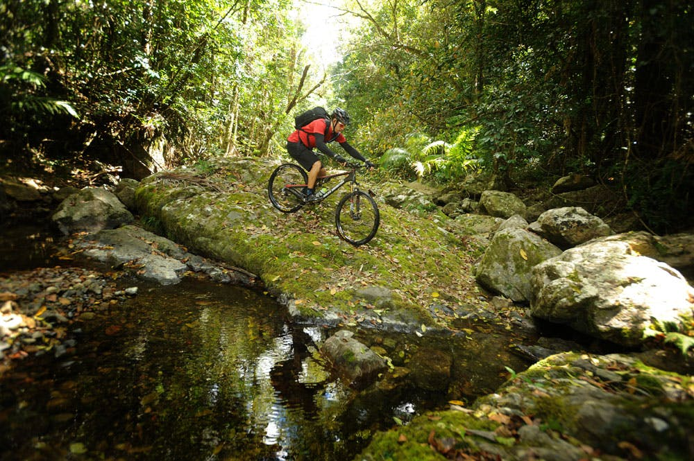 Man mountain biking near creek in Whitsunday rainforest.png