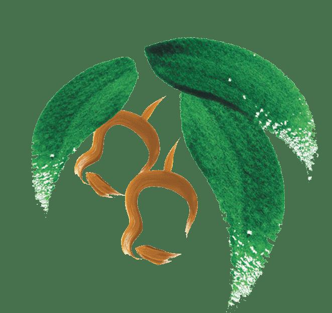 City of kalamunda logo transparent background   no text