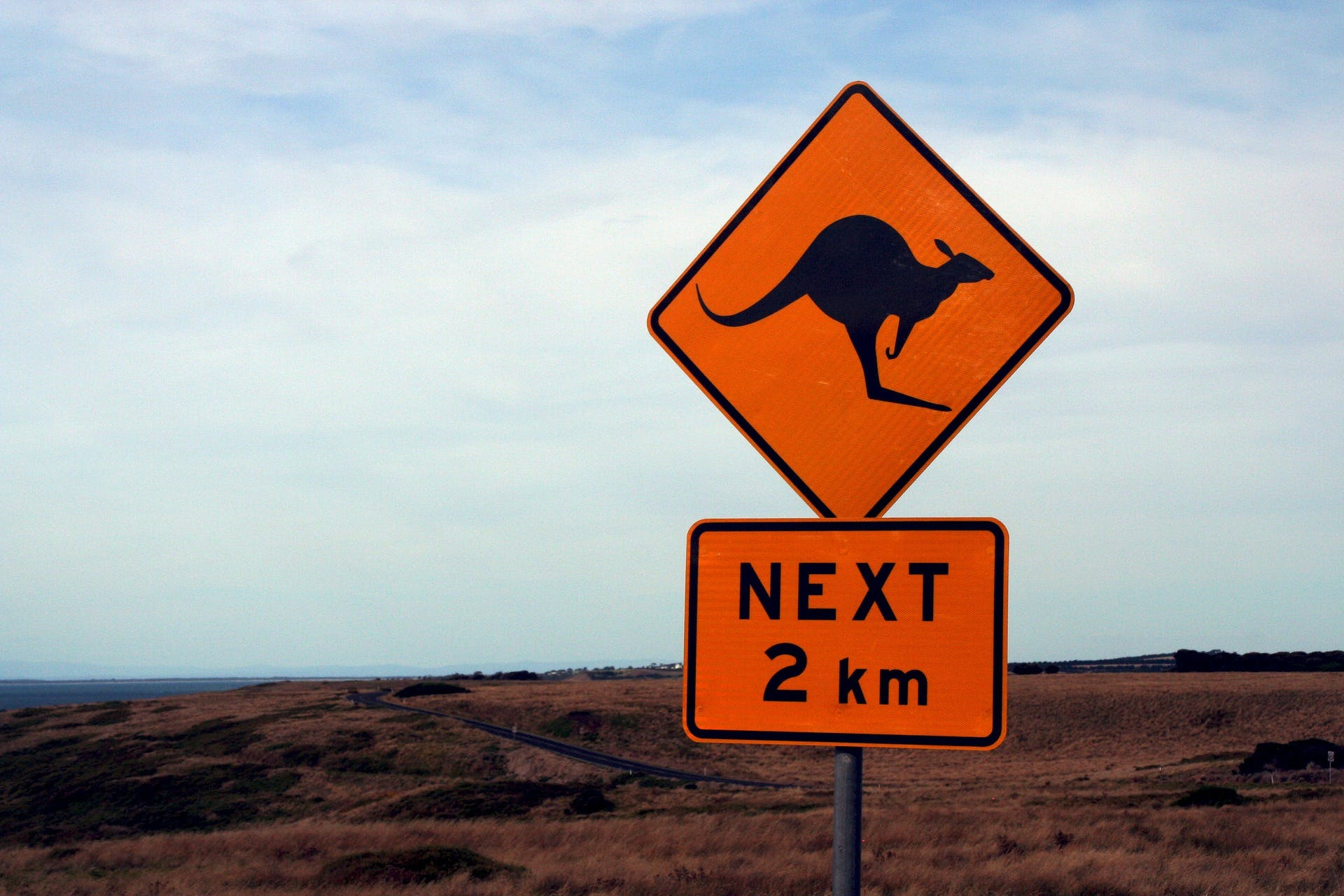 Road sign - kangaroo.jpg