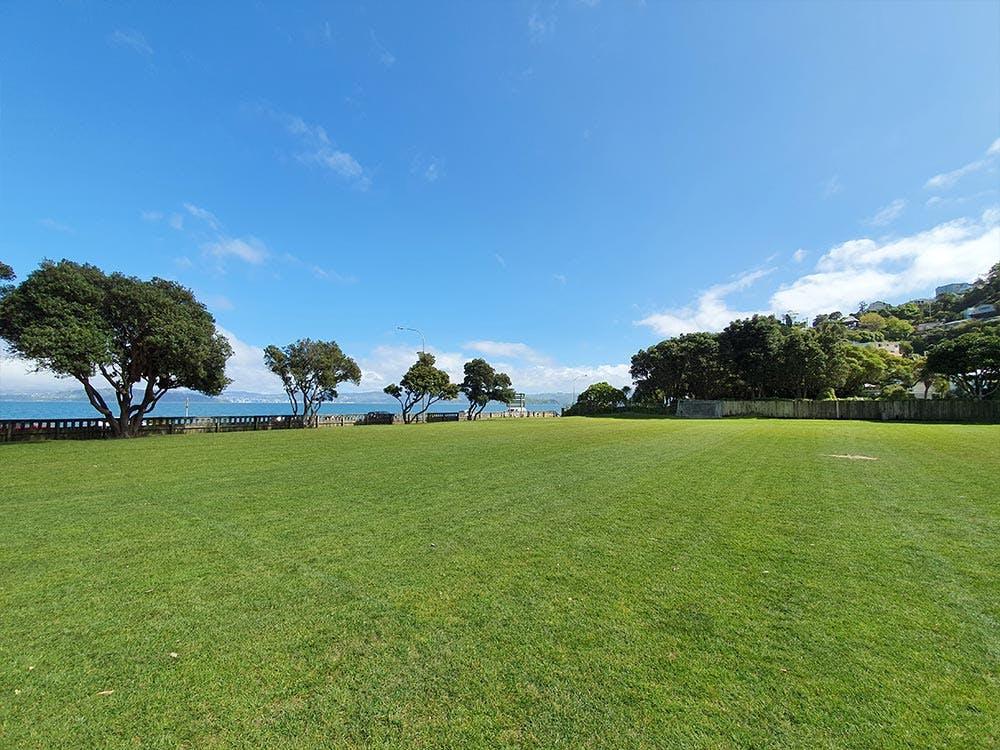 Williams Park grass