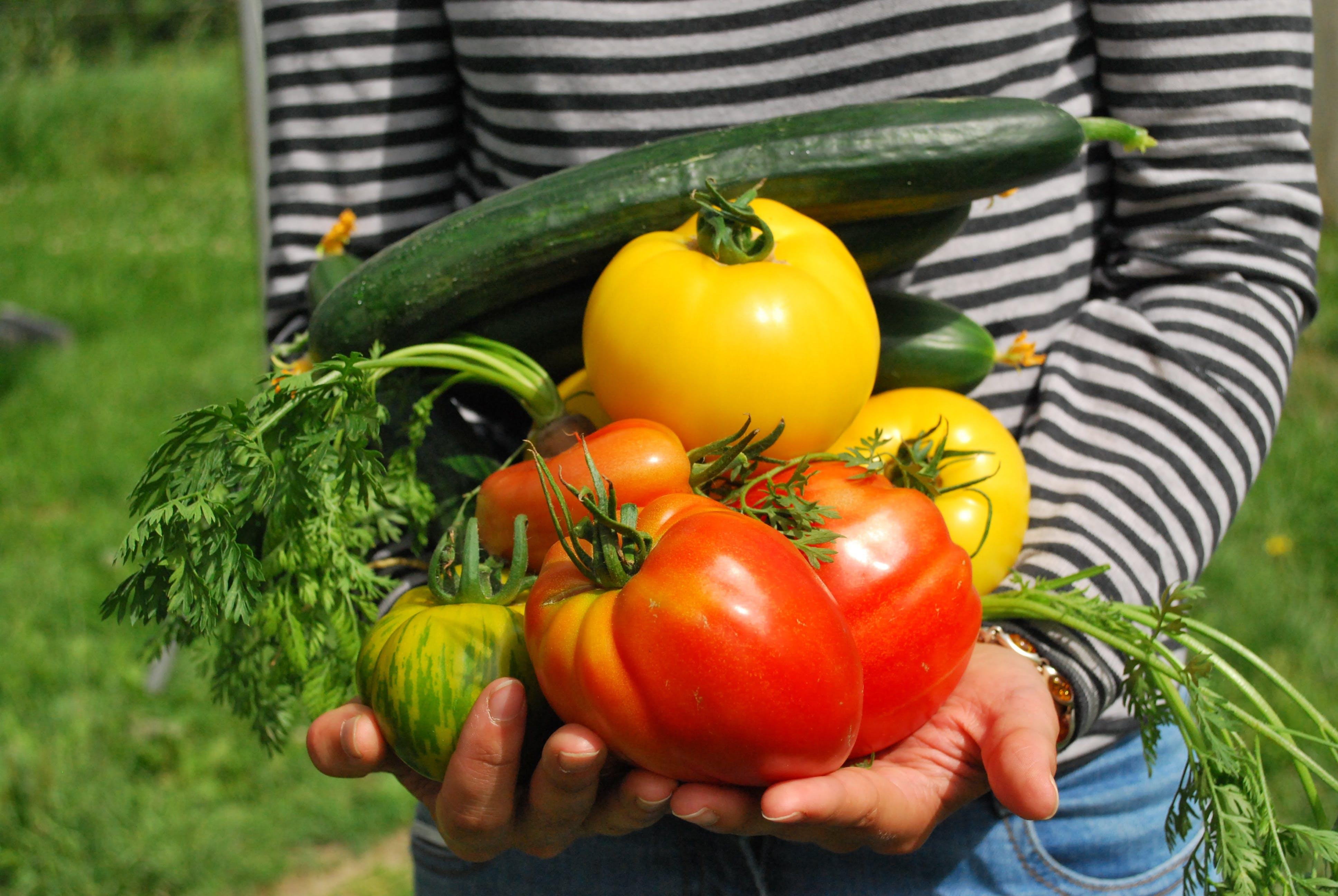 Vegetables 742095