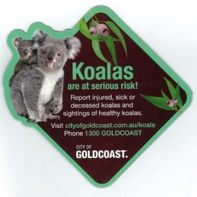 Koala Fridge Magnet