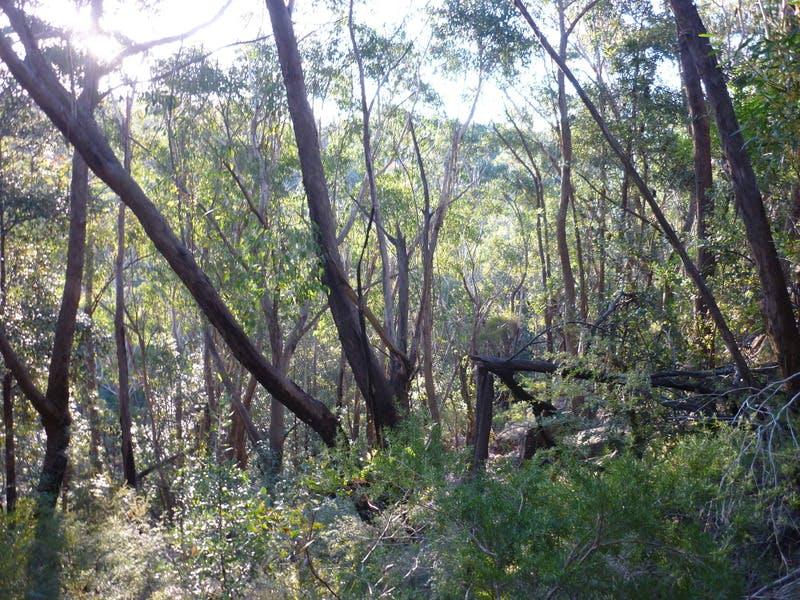 Bushland area - Batman Reserve