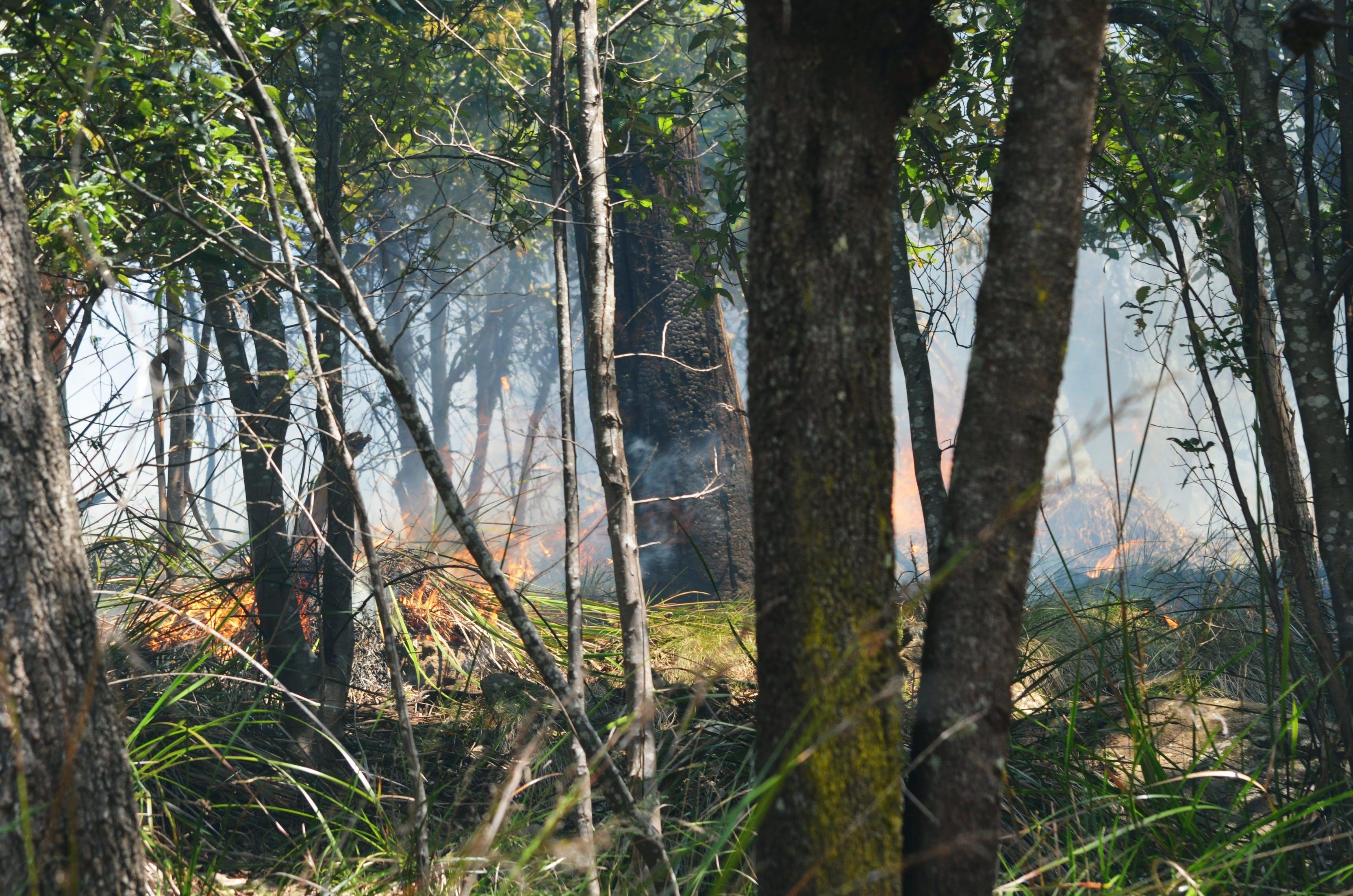 A controlled Bushfire