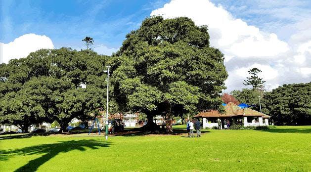 Ashfield Park