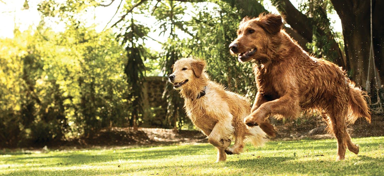 Dogs Off Leash