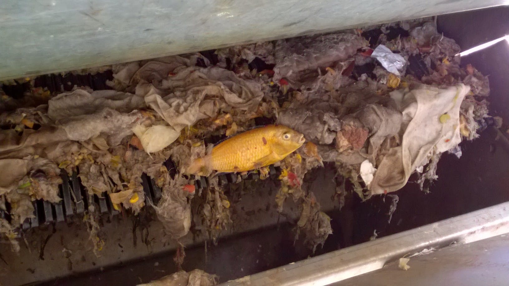 The interesting things we find at our Wastewater Treatment Plants.