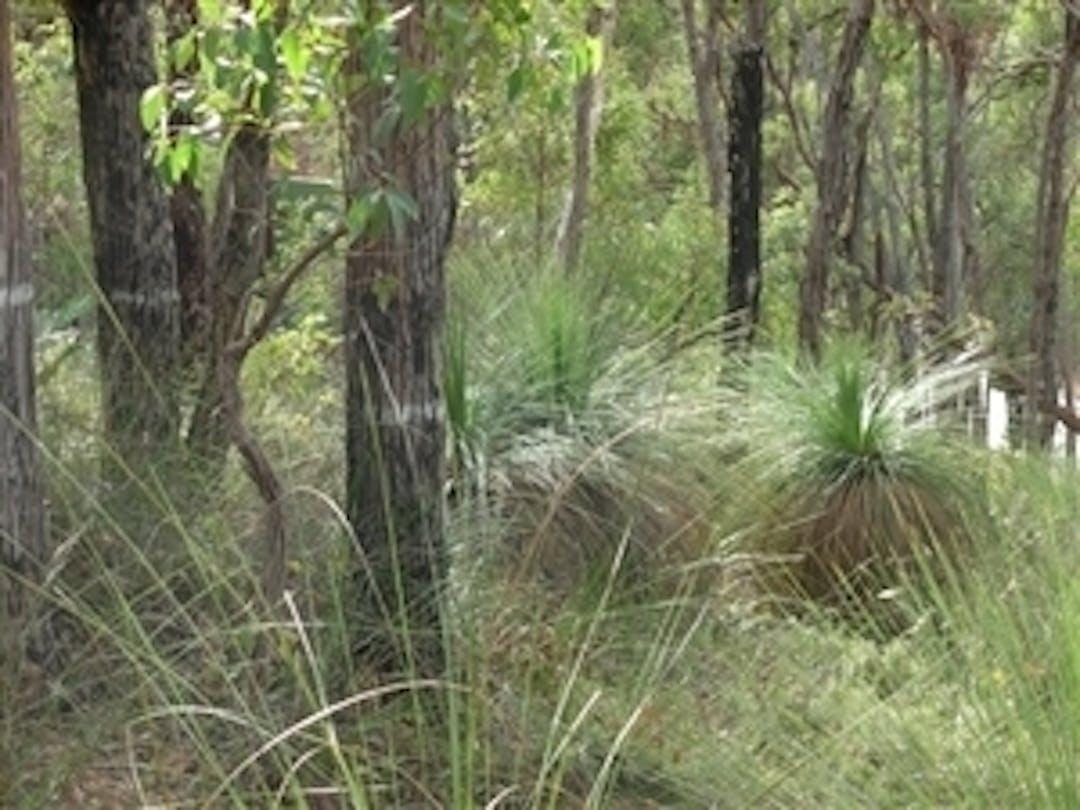 Bushland in the City of Kalamunda