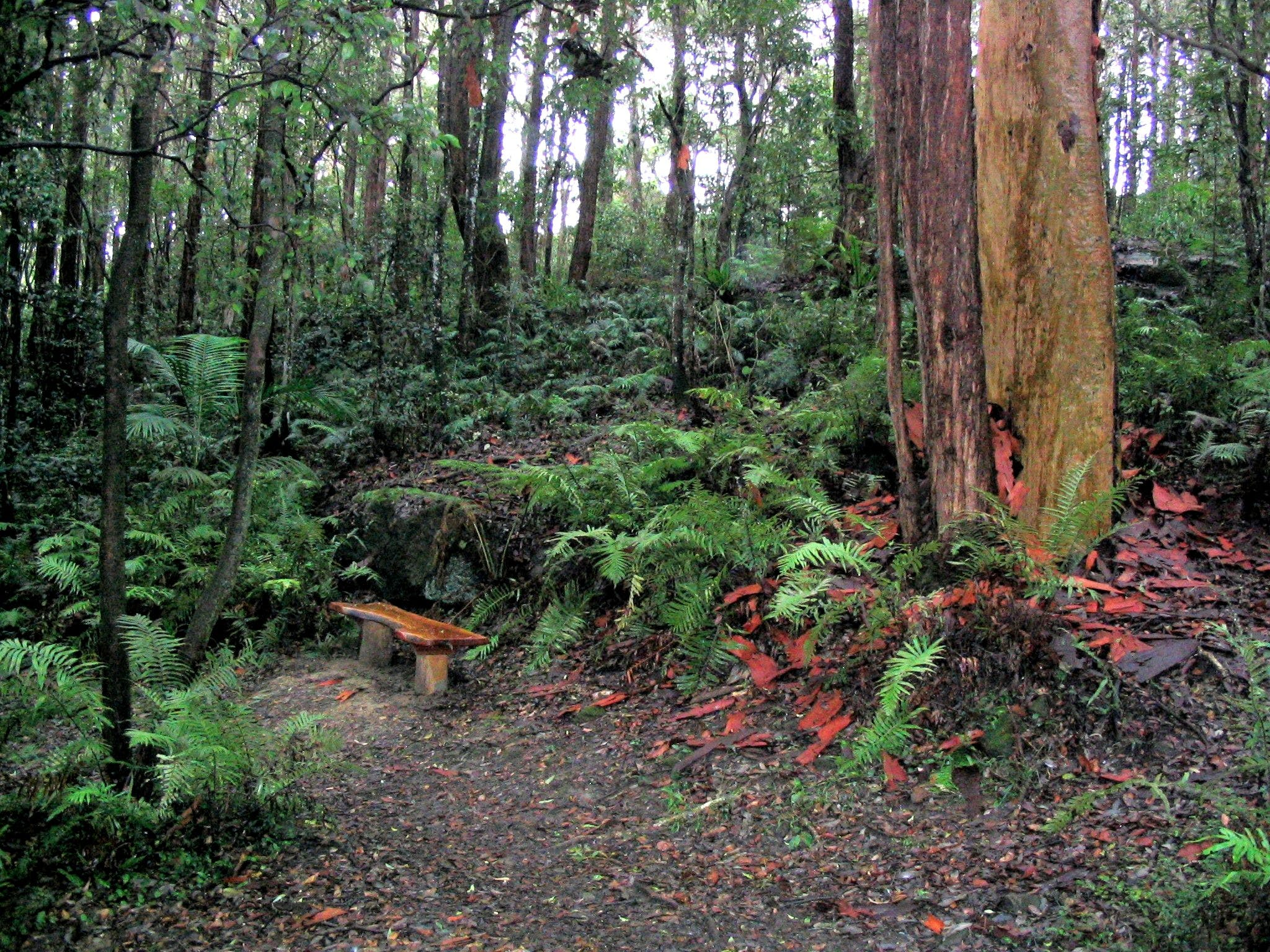 Bench  Near Swaines Creek Ferndale
