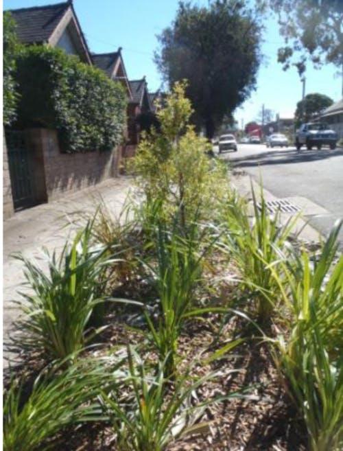 Example of a verge garden