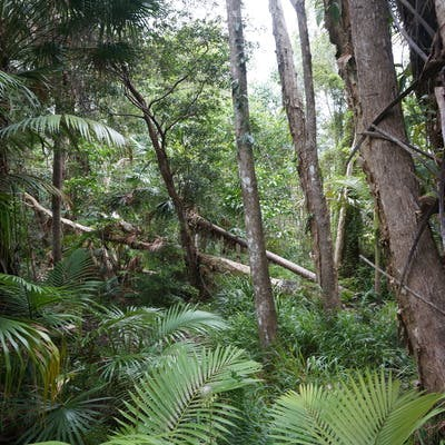 Natural vegetation will be protected