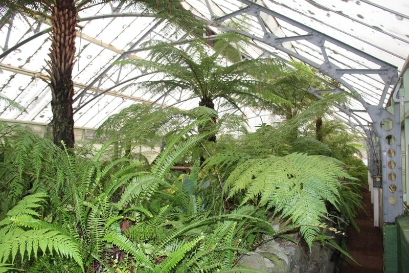 View of ferns inside conservatory