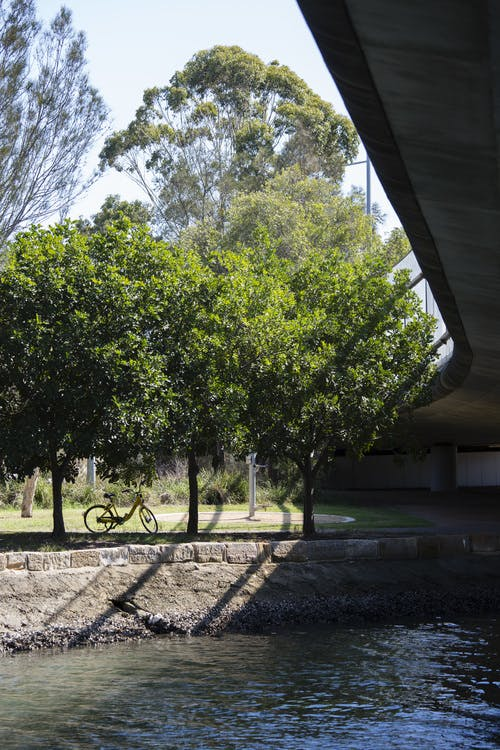 Cooks River path with trees - GreenWay