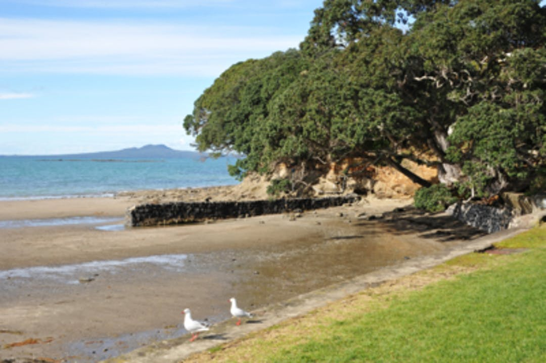 Image of a beach with pohutukawa trees overhanging the sand and Rangitoto in the distance.