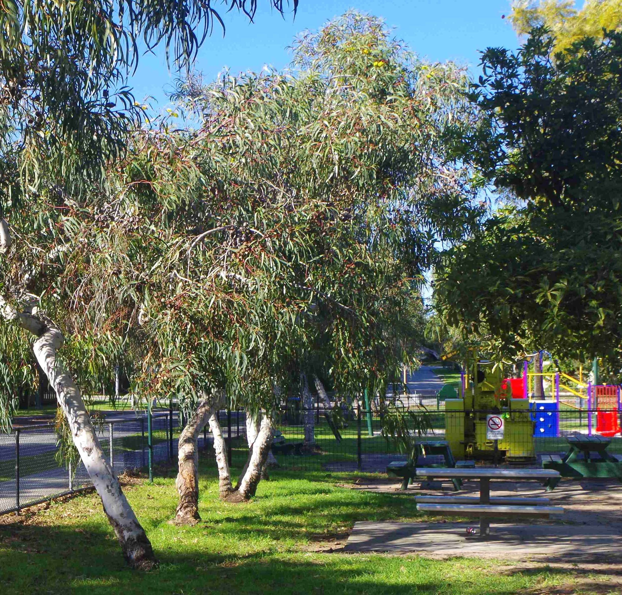 Carrington Park Vegetation