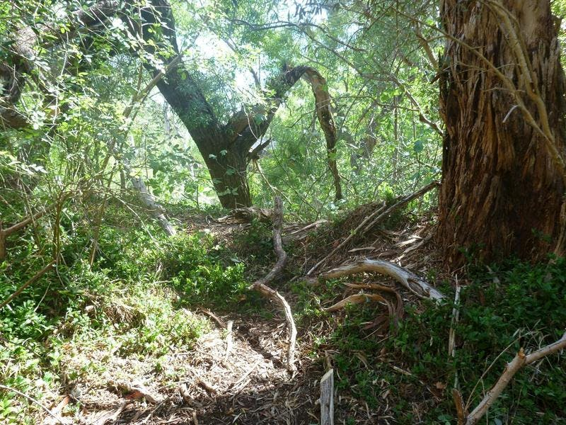 Section of Michael Perry Reserve infested with woody weeds