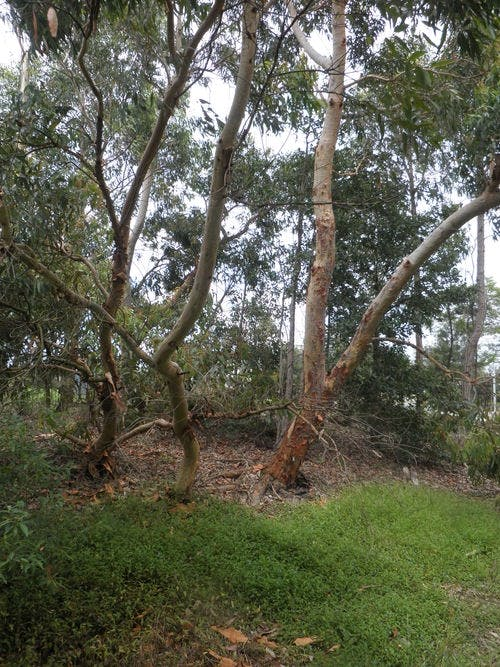 tree image - cooks river valley garden