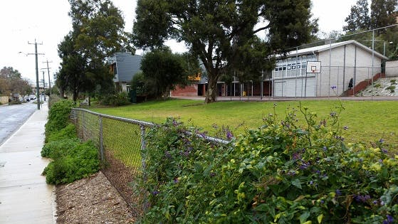North Fremantle Primary School - grassed area to cyclone fence to become part of the school - currently an old setback part of John Street road reserve