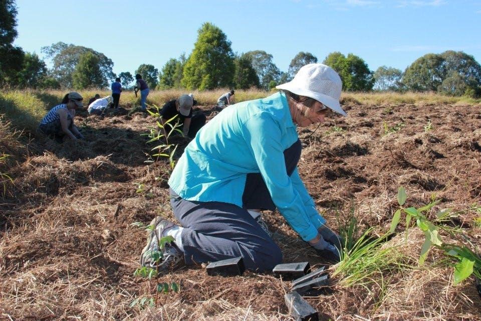 Belivah Creek planting