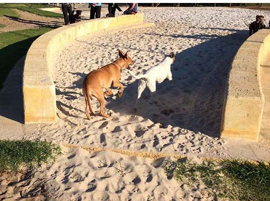 Dog sand play/dig area