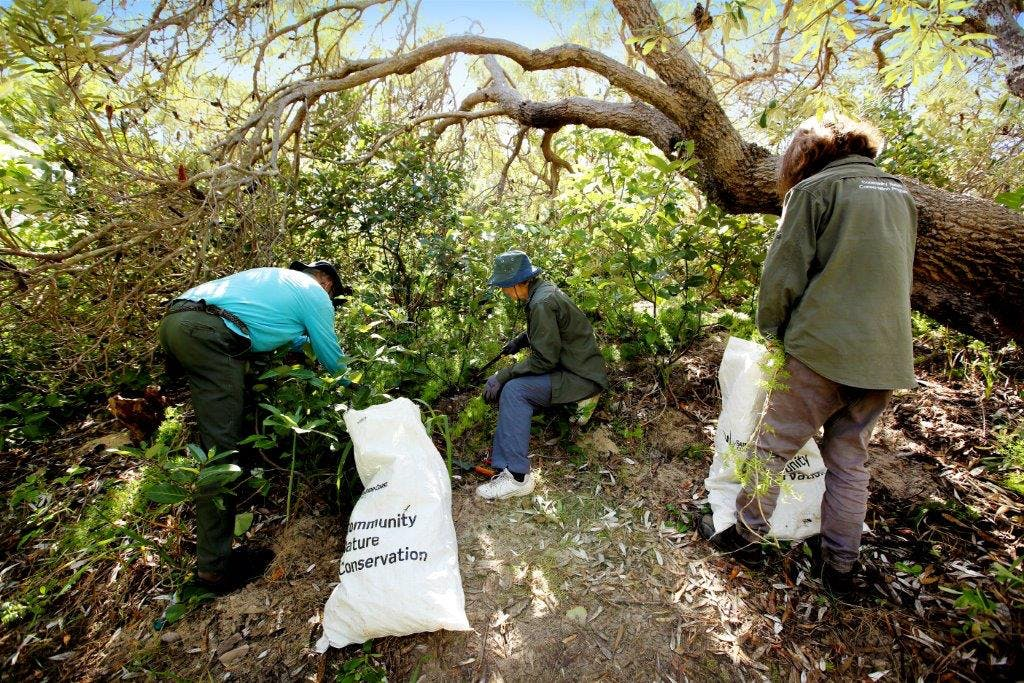 A strong community gets involved in restoring our native environment