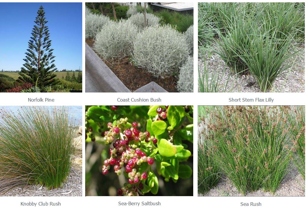 Vegetation example images