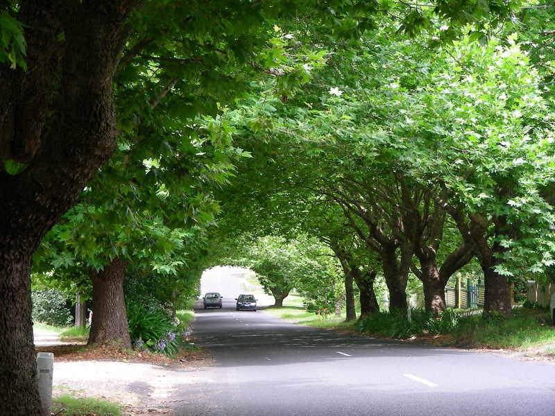 Plane Tree Avenue at Wentworth Falls