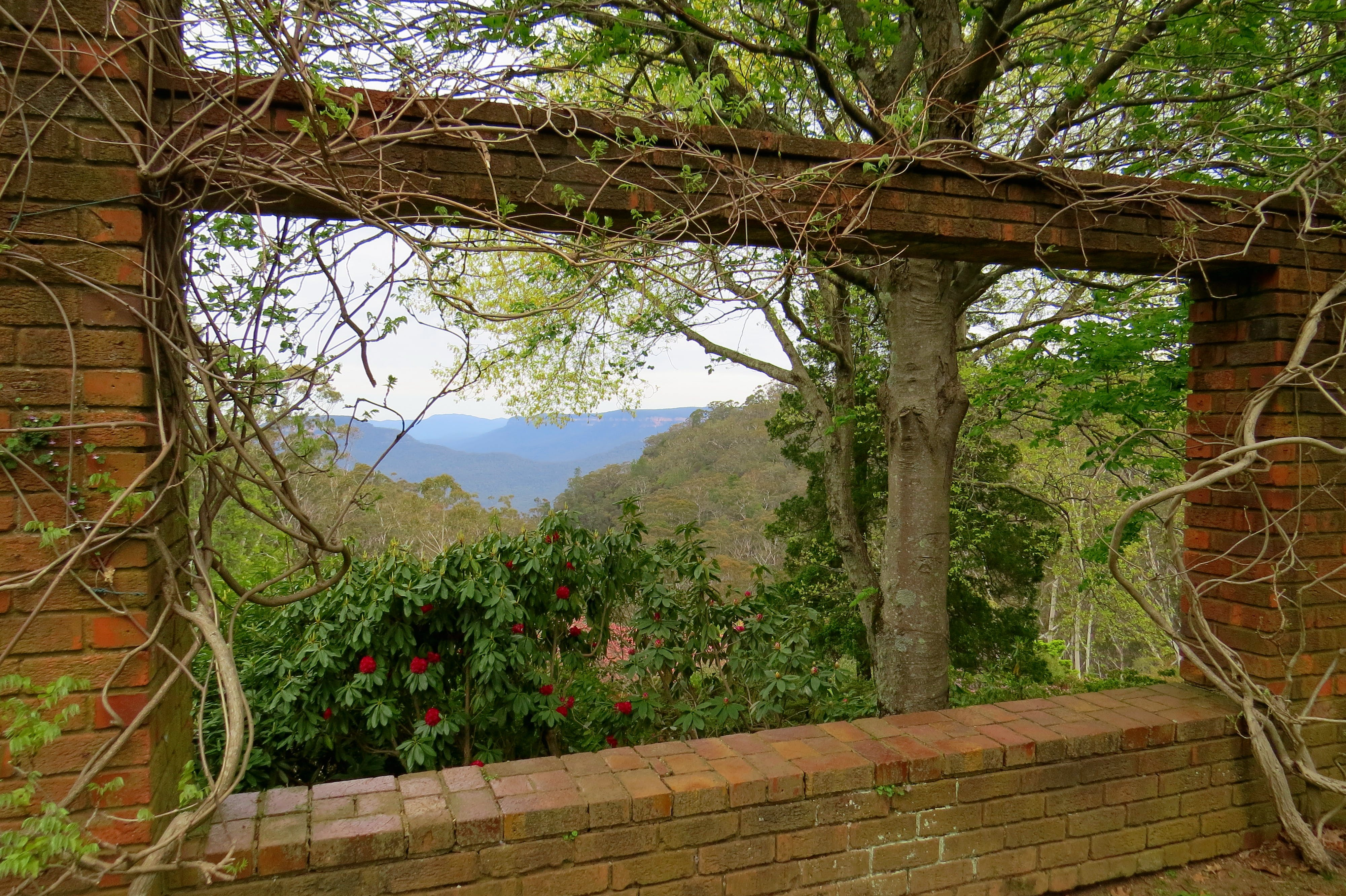 This picture is taken at Everglades Gardens, Leura. While the view is stunning, it is hardly unique. Wherever you live in the Blue Mountains, soul-restoring vistas are only moments away. That's what I love about the Blue Mountains. (Continued)