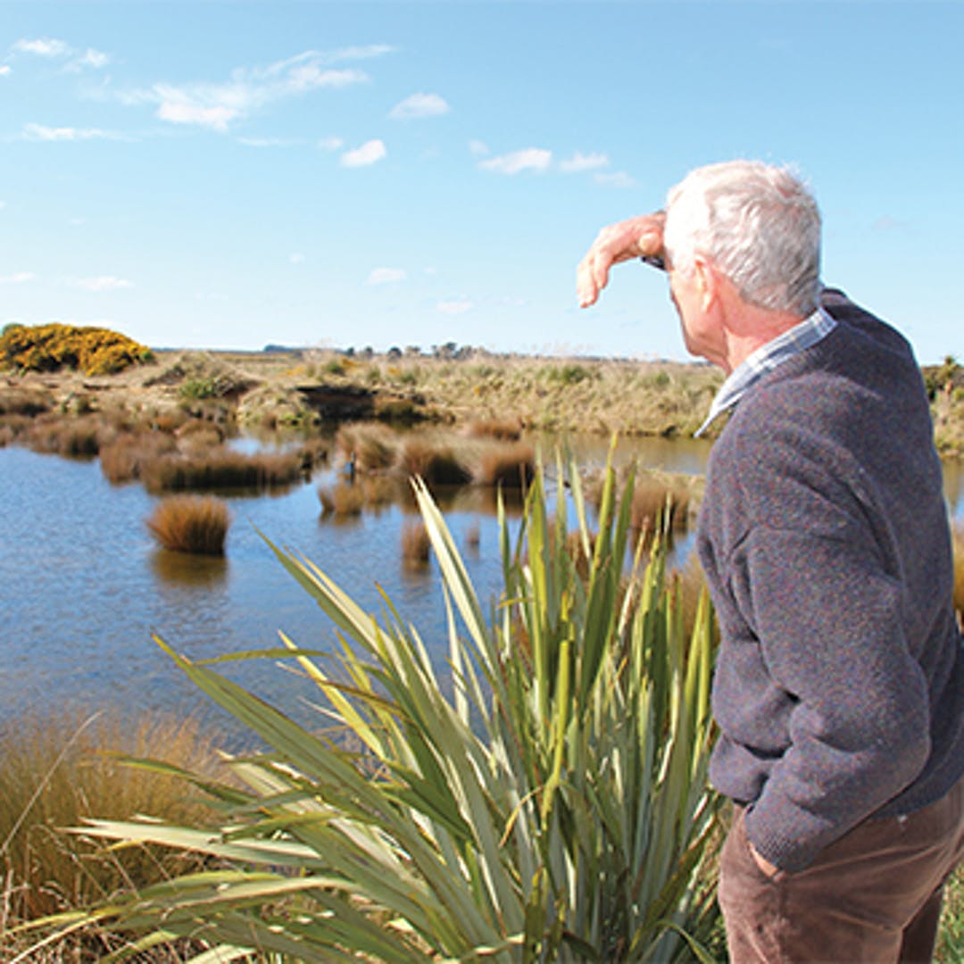 Man looks over wetland at Waituna