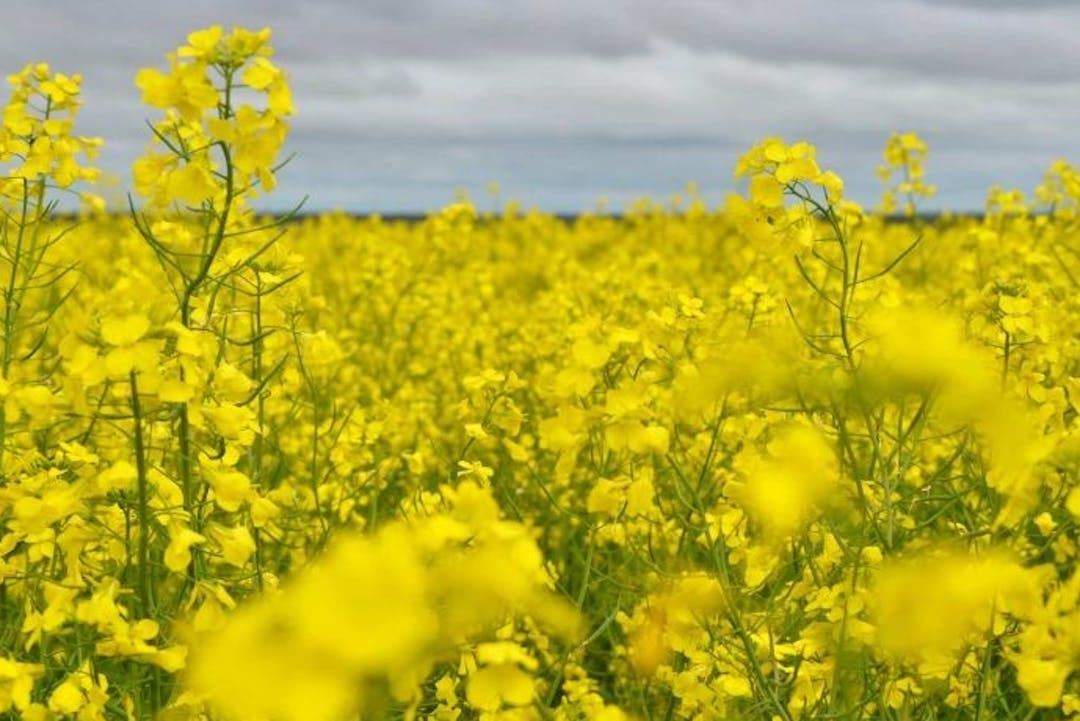 Consultation on the lifting of the Genetically Modified crops moratorium