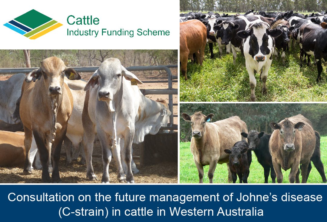 Management of Johne's disease (C-strain) in cattle in Western Australia consultation