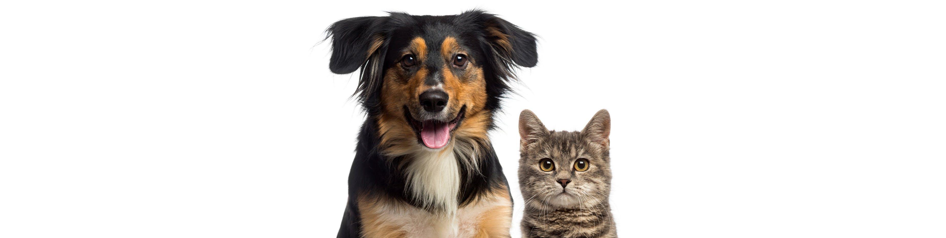 Domestic Animal Management Plan