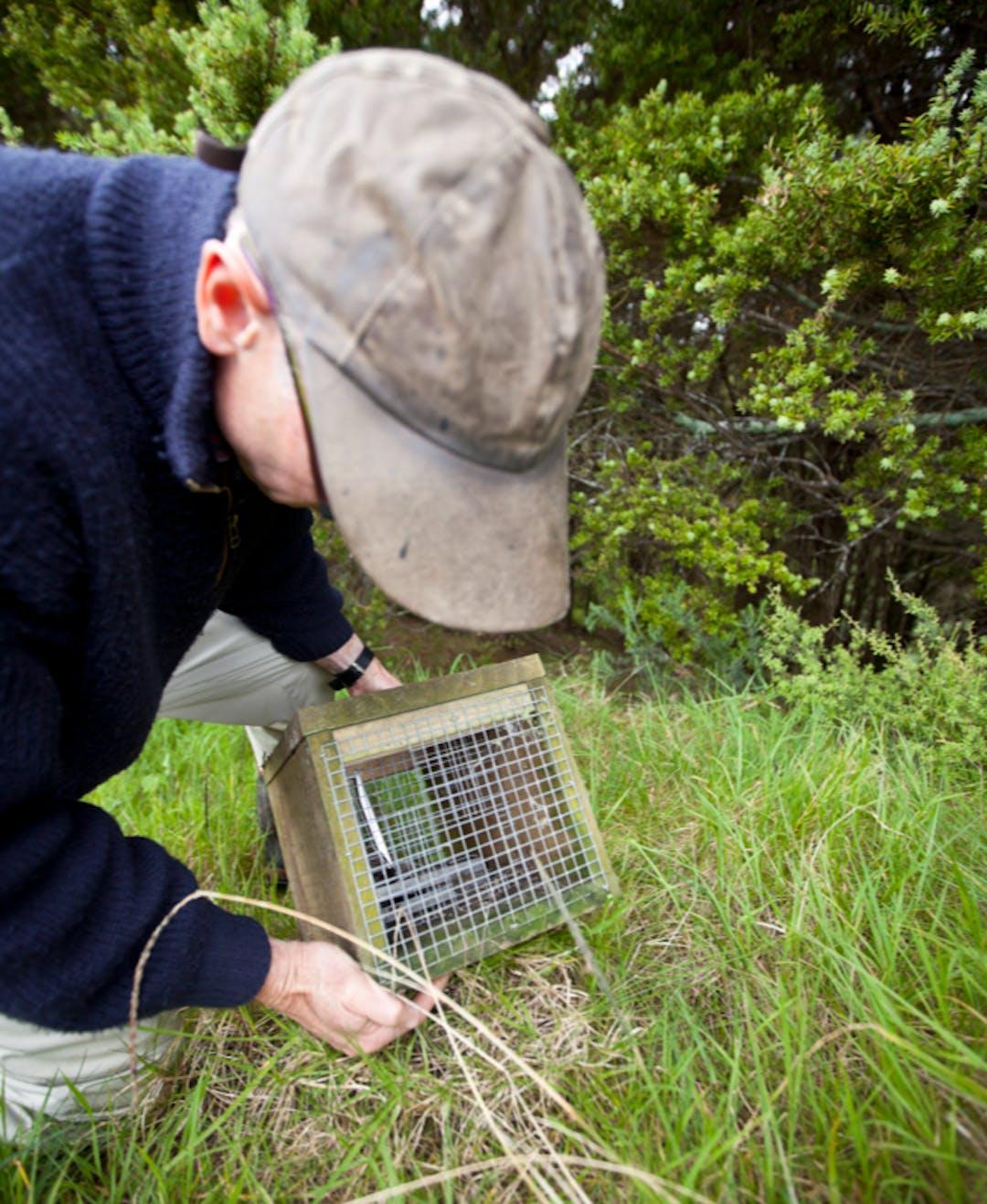 A man checking a pest trap