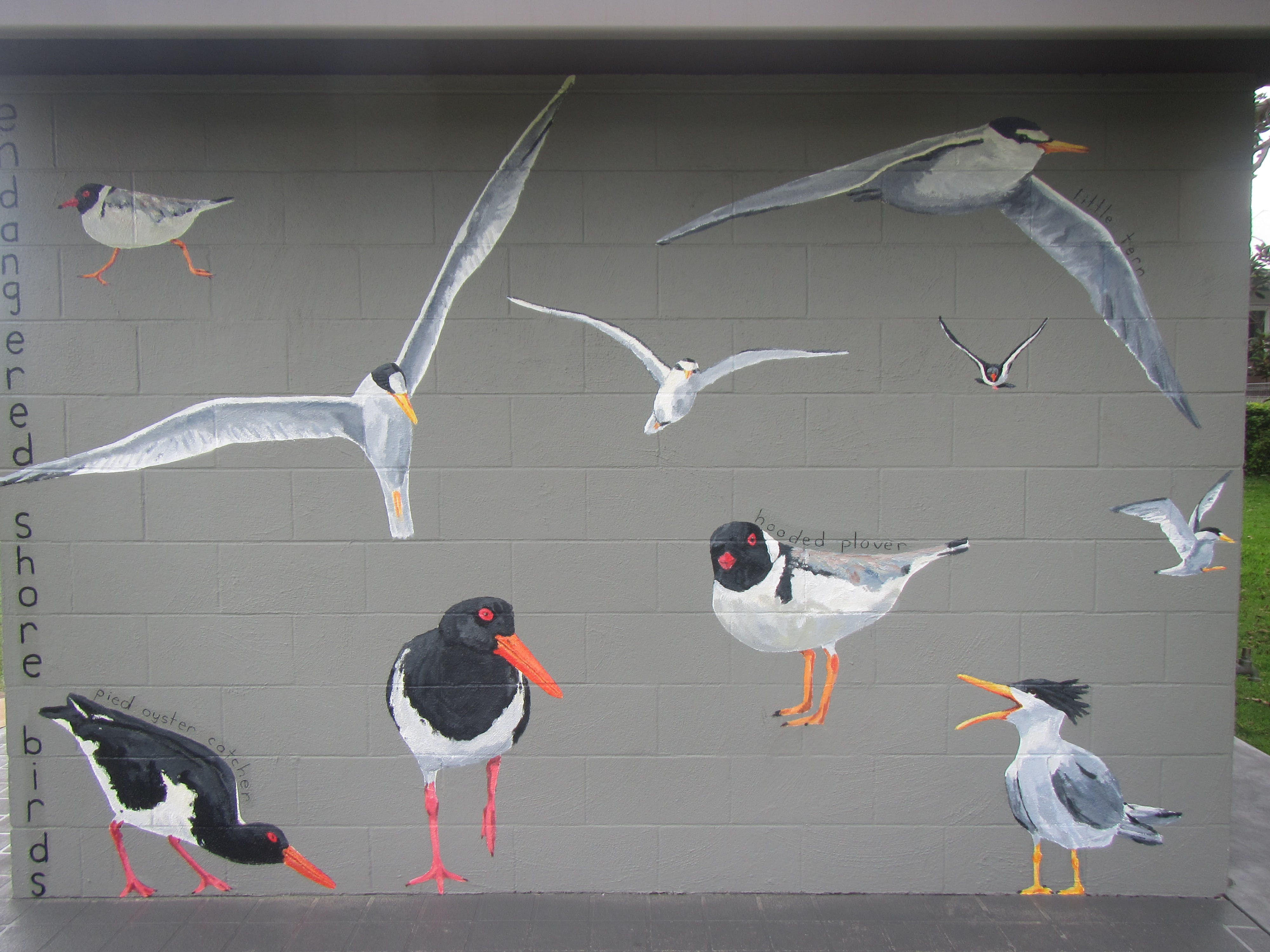 Currarong shorebird mural by artist Robyn Gibson. Photo: S. Tedder , OEH.