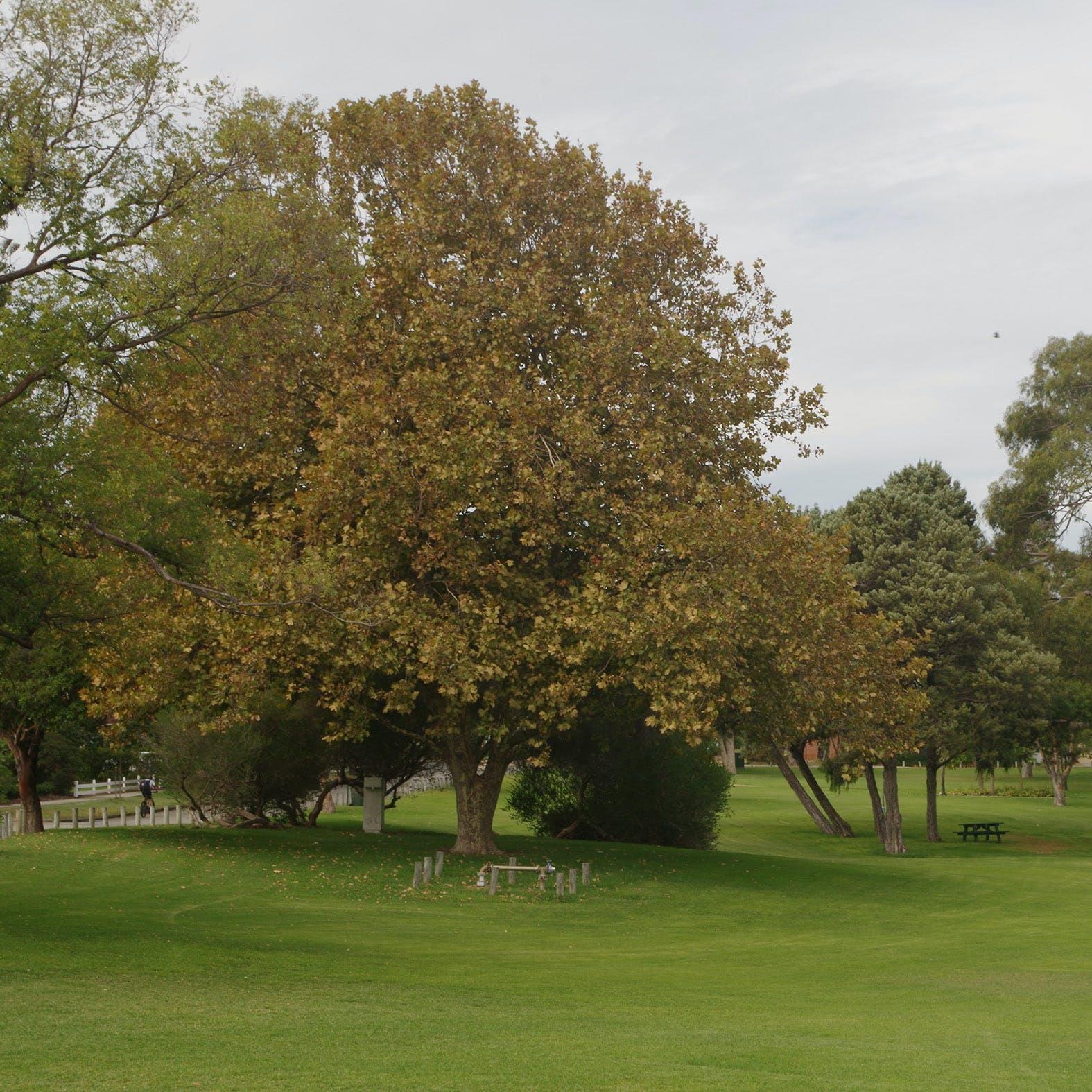 Mason Gardens Dalkeith