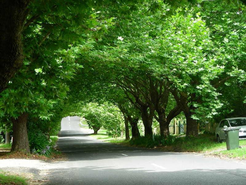Street Tree example ii