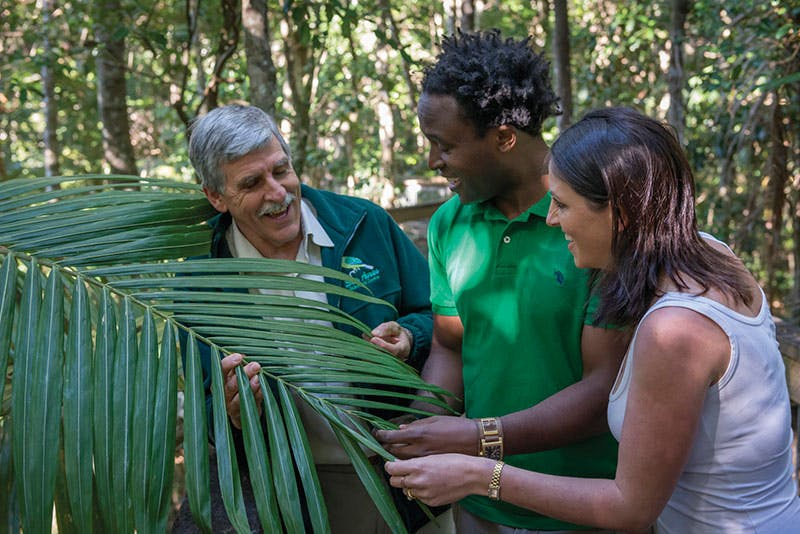 This rare subtropical rainforest provides a very different piece of biodiversity for NSW. Photo credit: J Spencer, OEH.