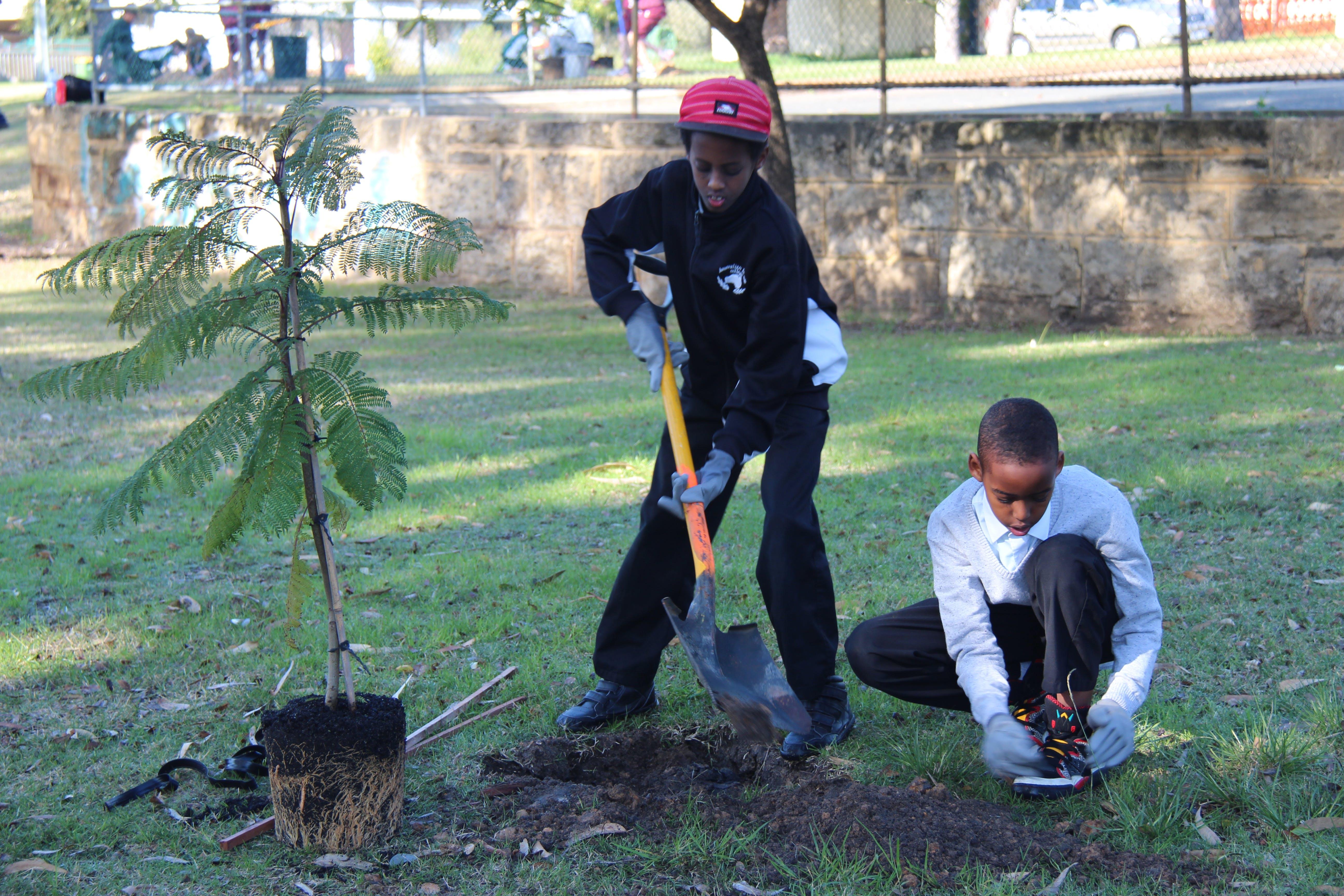 School Tree Planting Day