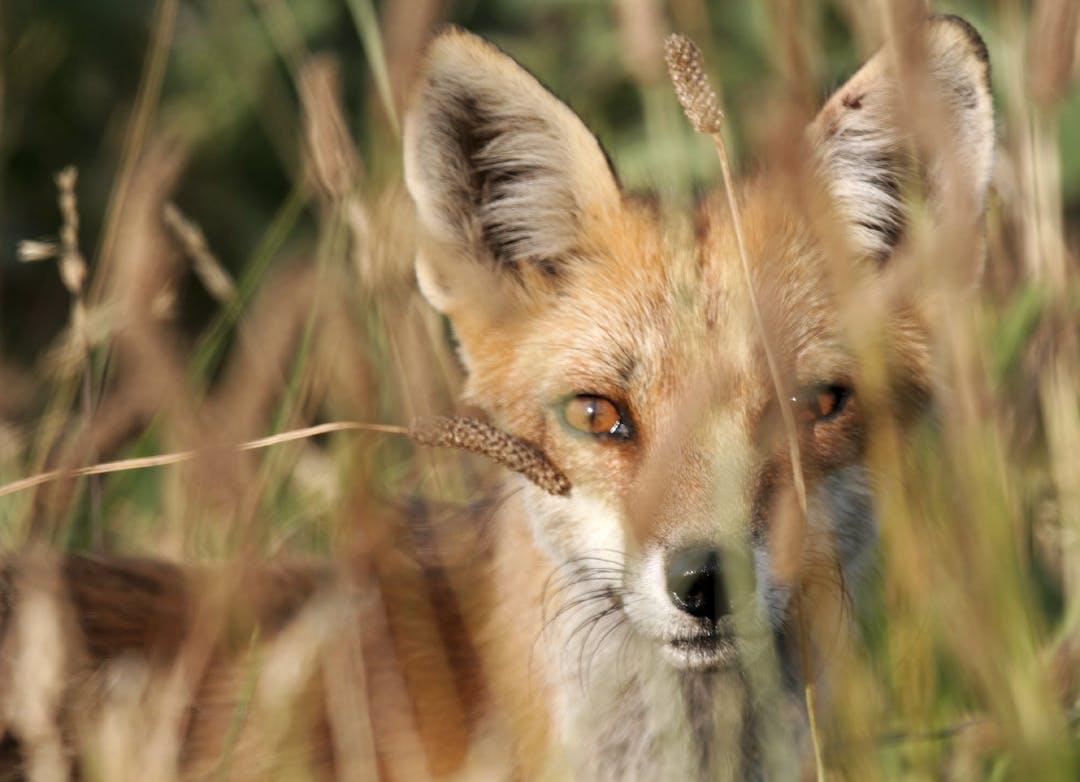 Wil mm.photos ecosure %28103%29   fox