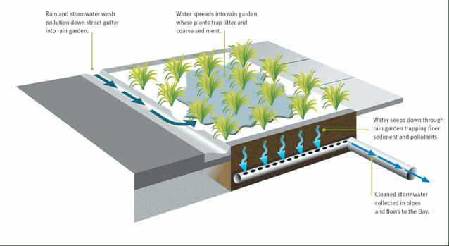 Marrickville West Eco Water Garden Your Say Inner West