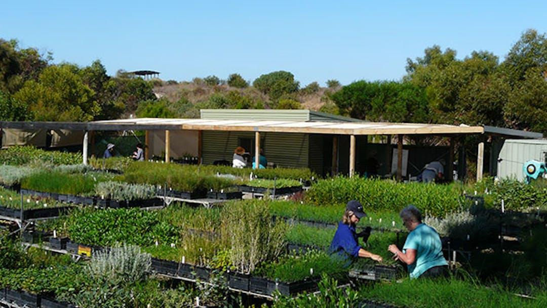 Hindmarsh island landcare nursery 2014 photo nicail nicol