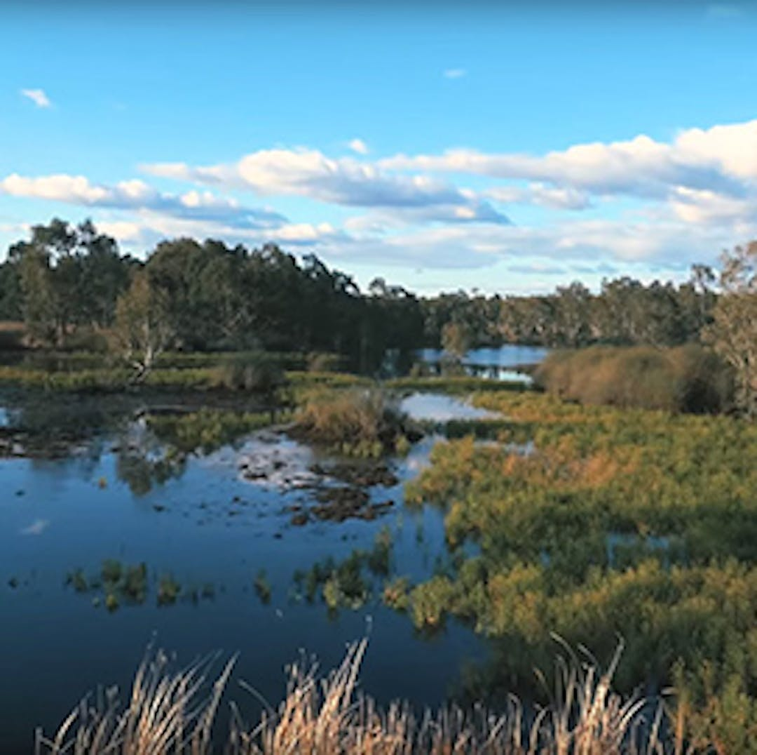 image of a wetland