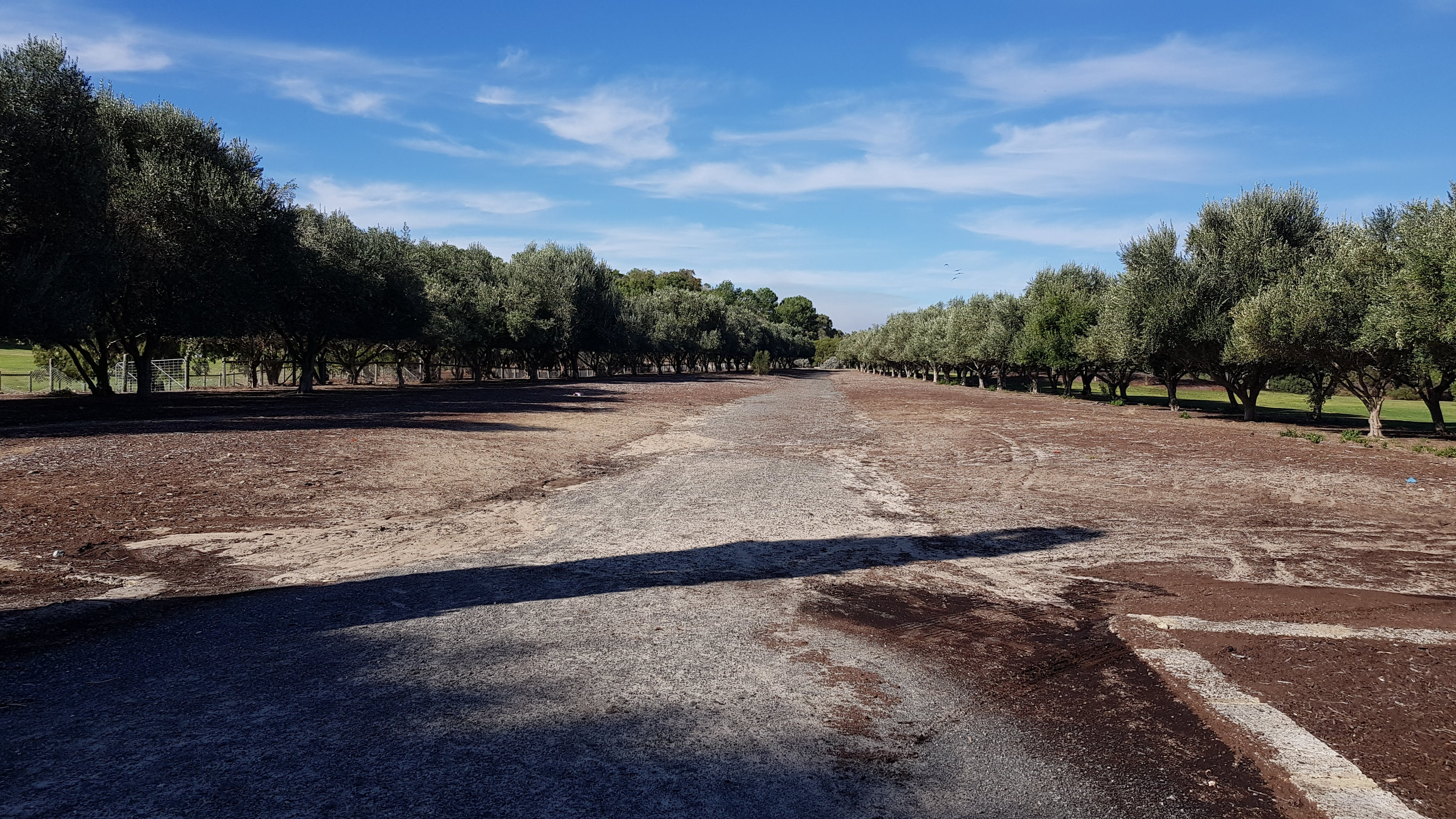 View to olive grove