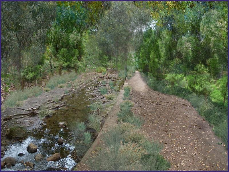 Proposed landscape with local native plant species